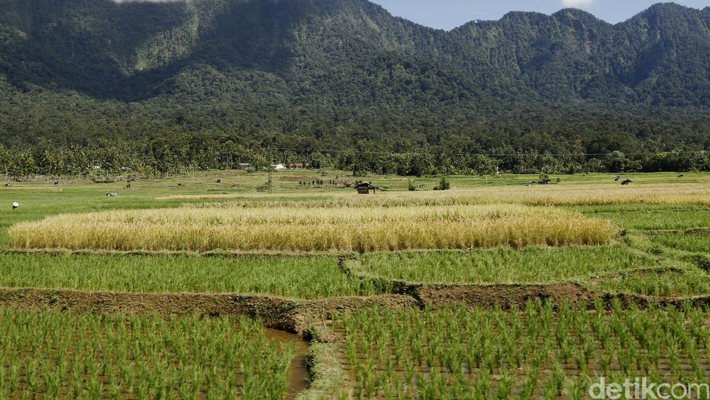 170 Ha Sawah di Jawa Berubah Jadi Bangunan Setiap Tahun