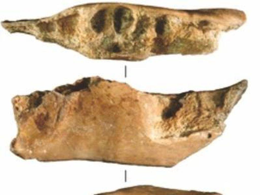 Ini Cerita Temuan Fosil Gigi Pertama Manusia Purba dari Mata Menge