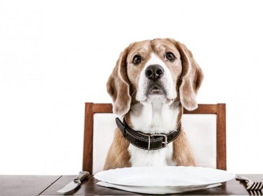 Dijilat Anjing, Seorang Wanita Terkena Infeksi Berpotensi Mematikan