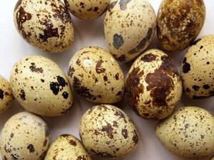 Tips dan Trik: Telur Puyuh Ceplok