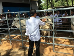 Tondon, Nama Calon Anak Sapi Jantan di Rumpin Pilihan Jokowi