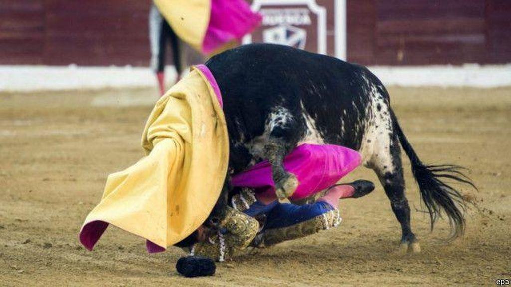 Matador Profesional Tewas Diseruduk Banteng
