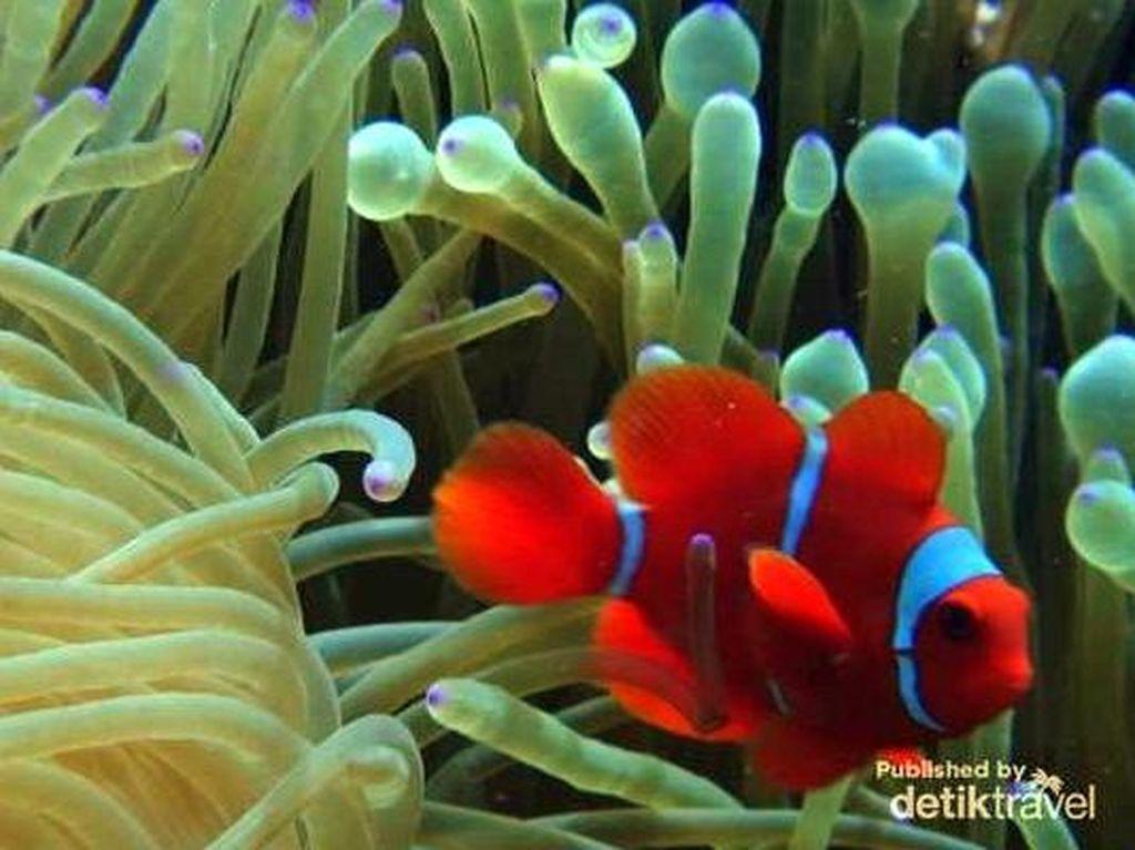 Ingin Diving atau Snorkeling Usai Lebaran, Wakatobi Tempatnya!