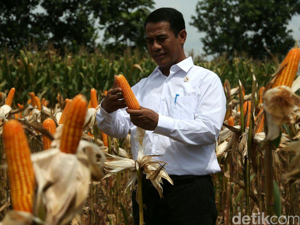 Jokowi Tanam Jagung di Gunung hingga Kuburan