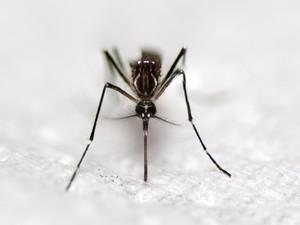 Kirim Ancaman ke Nyamuk, Akun Pria Ini Ditutup Twitter