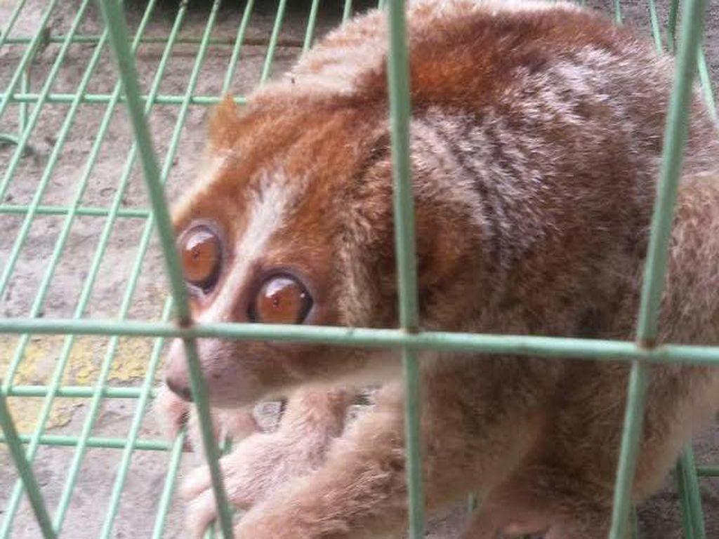 Pembalakan Liar dan Exotic Pet Berisiko Munculkan Penyakit Zoonosis Baru