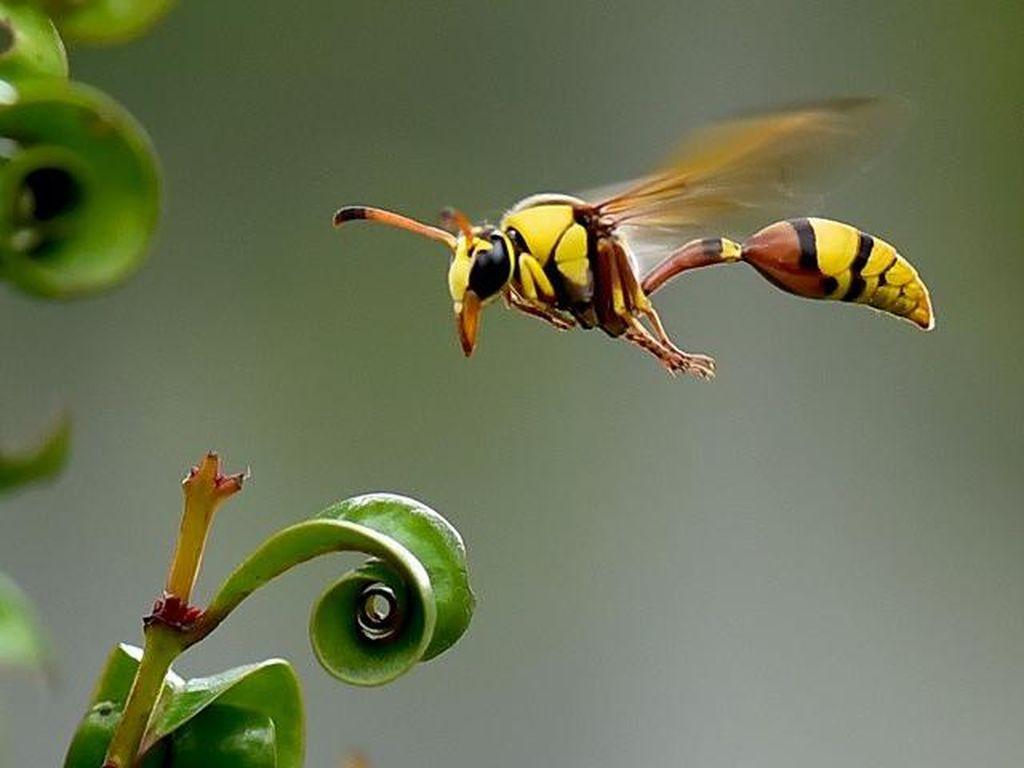 Studi: Kiamat Serangga Ancam Kehidupan di Bumi