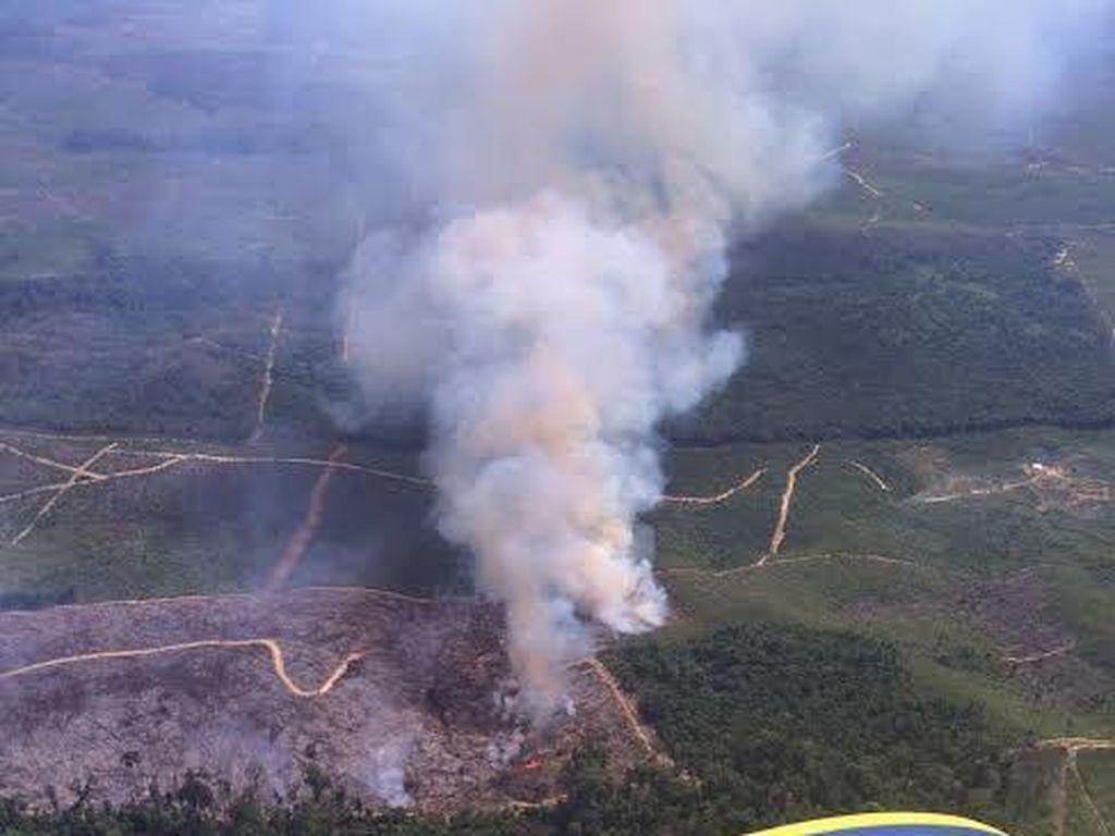 Penampakan Lahan yang Terbakar di Riau yang Tengah Dipadamkan Satgas Udara