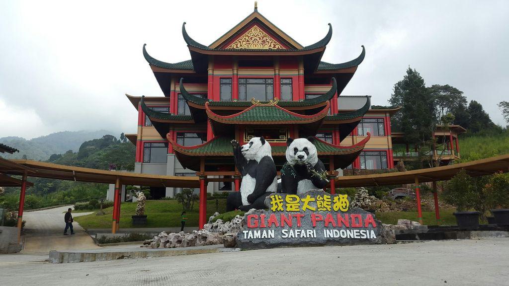 Akhirnya, Sepasang Panda Akan Hadir di Taman Safari Indonesia