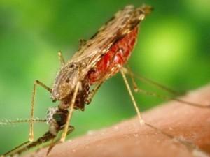 Ilmuwan Temukan Cara Basmi Nyamuk Dengan Perangkap Bau Badan