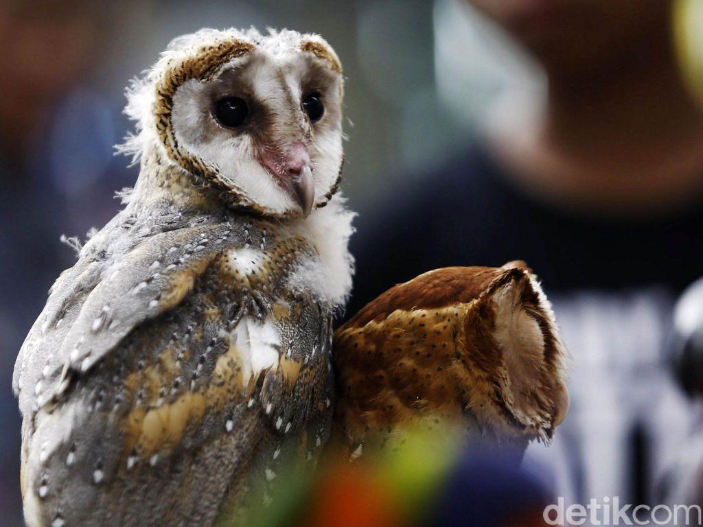 Bumi Kedatangan 2.500 Spesies Baru di 2050