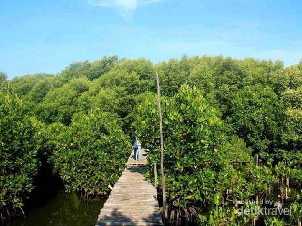12 Manfaat Hutan Bakau bagi Manusia, Bukan Cuma untuk Wisata