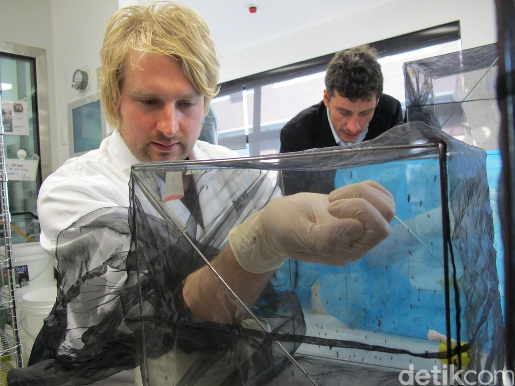 Mengintip Laboratorium Tempat Nyamuk Ber-Wolbachia Diciptakan