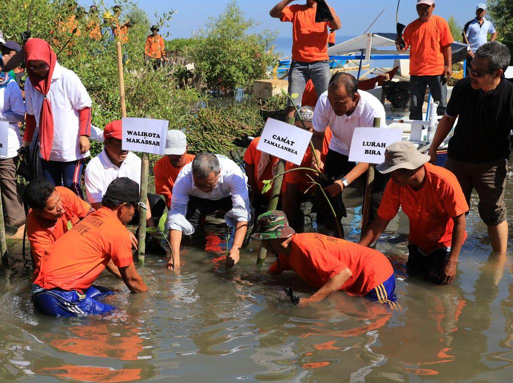 20 Ribu Bibit Mangrove Ditanam di Lantebung, Jadi Perisai Alam Pesisir Makassar