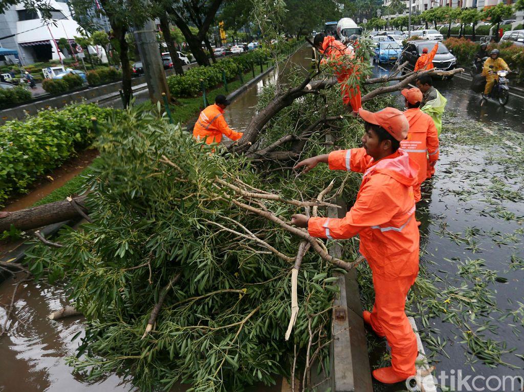Padang Dilanda Hujan dan Angin Kencang, 25 Pohon Tumbang