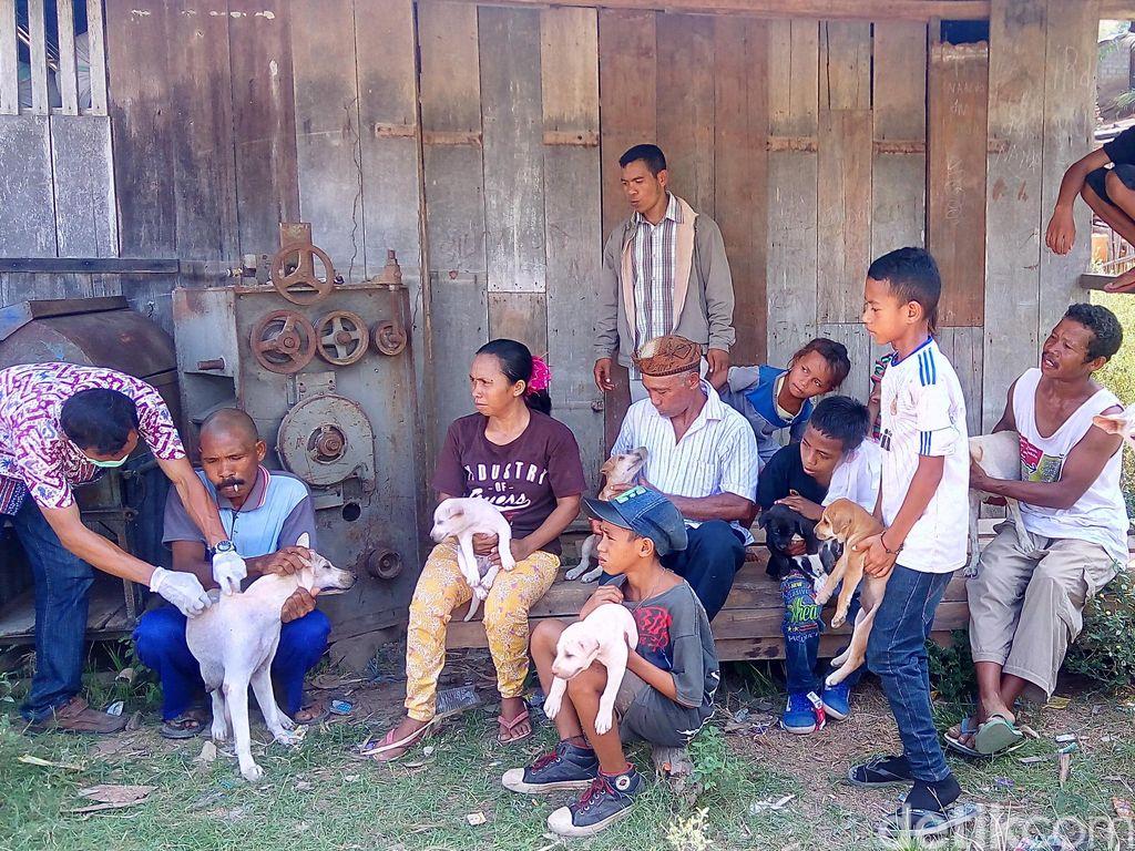 KLB Rabies di Dompu NTB, Pemda akan Kendalikan Populasi Anjing