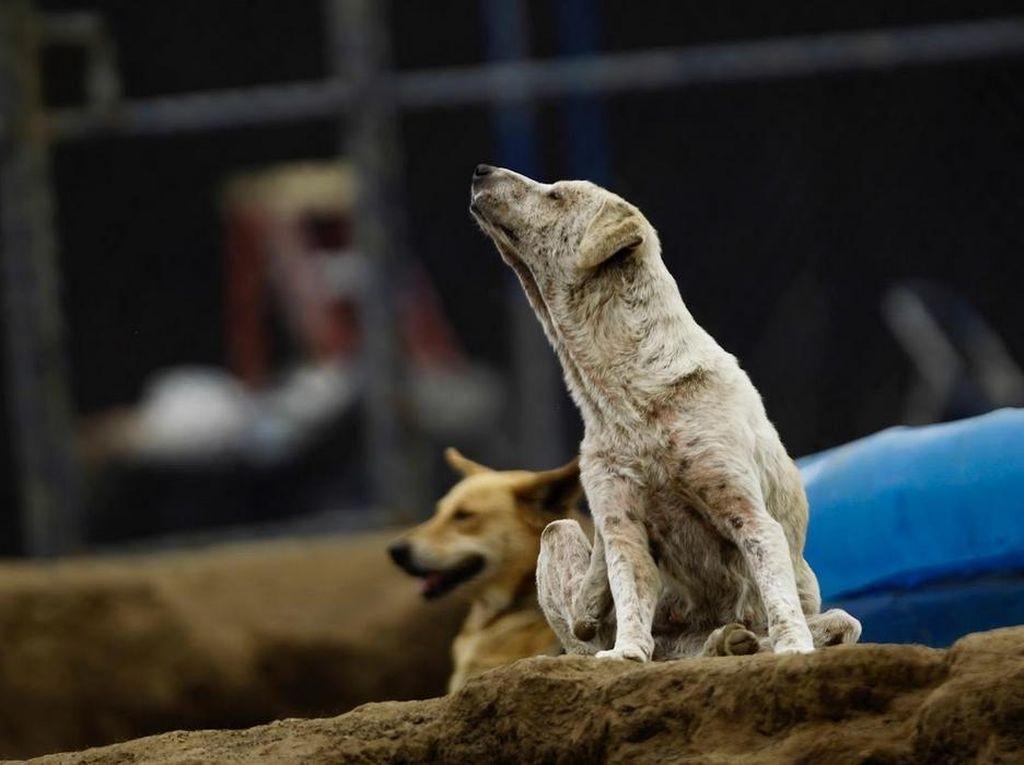 Pria Mengaku Setubuhi Anjing di Gowa, Termasuk Kelainan Beastiality?