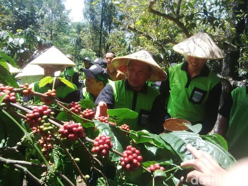 Panen Merah Kopi, Bupati Irsyad: Saya Ingin Petani Pasuruan Sejahtera