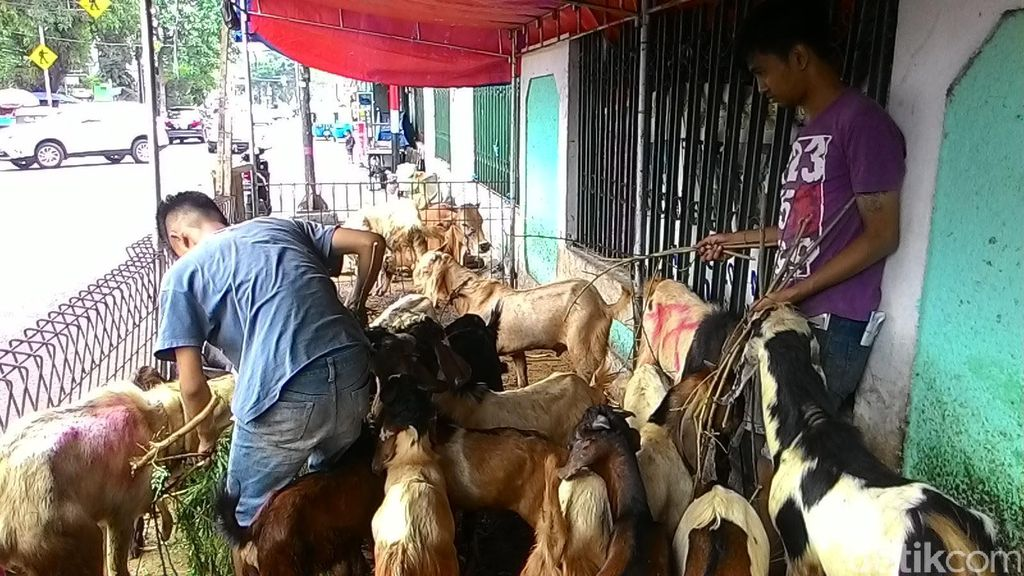 Di Banyuwangi, Jualan Kambing Sudah via Online
