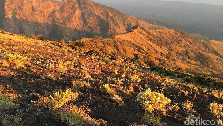 560 Pendaki Terjebak di Rinjani, Jokowi: Semua Bekerja, Semoga Selesai
