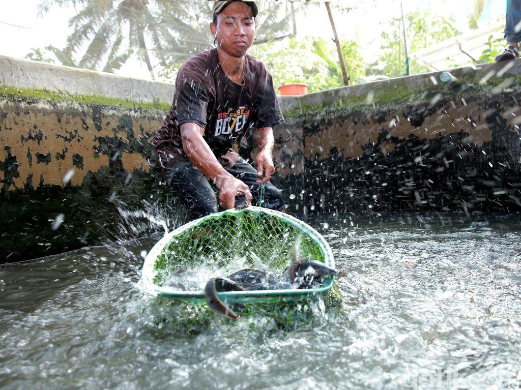 RI Berhasil Budidayakan 3,97 Juta Ton Ikan Sepanjang Kuartal I-2017