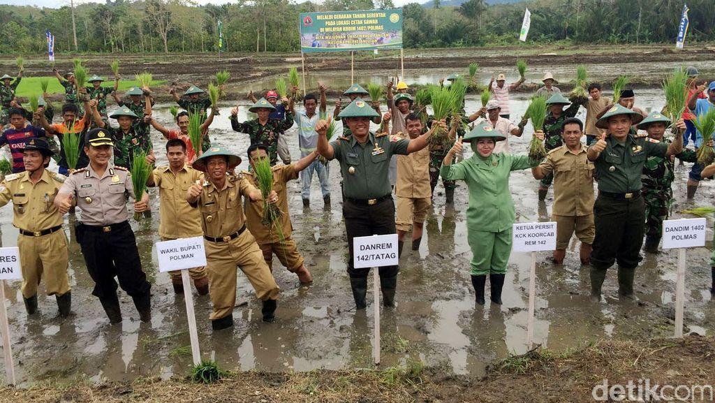 Prajurit TNI Bersama Petani Tanam Padi di Sulawesi