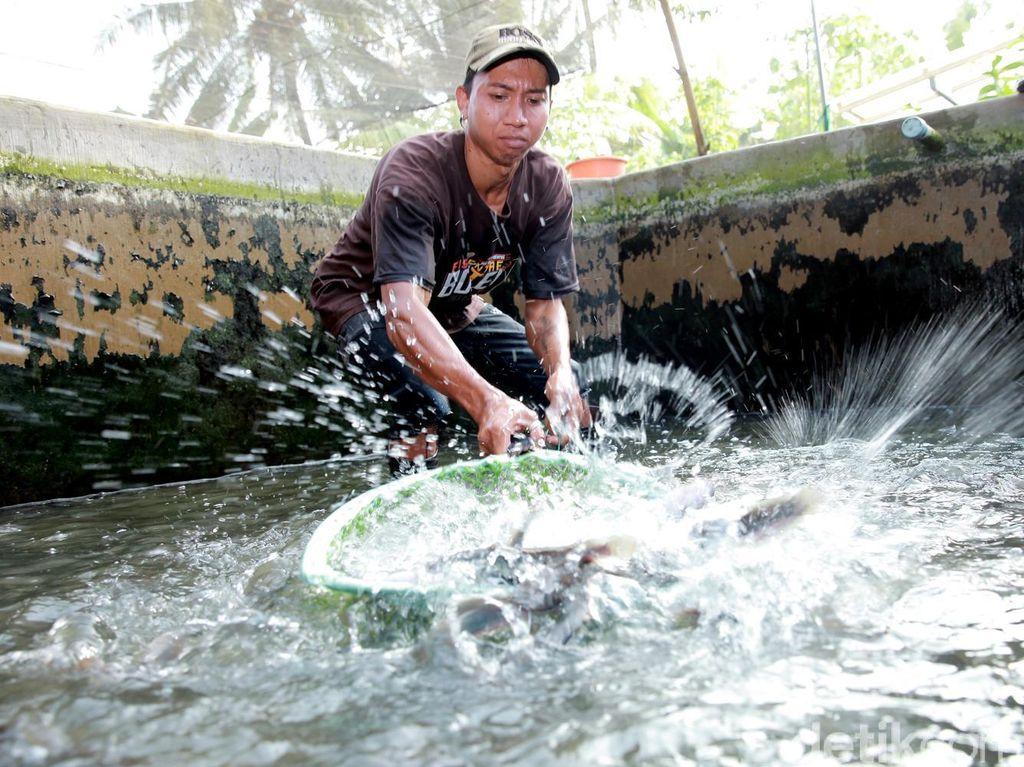 Pengusaha Ingin Kredit Bank Sampai ke Sektor Budidaya Ikan