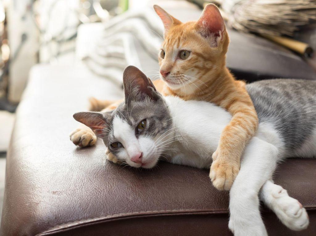 Bawa Kucing ke Kabin, Penumpang Ini Diusir dari Pesawat