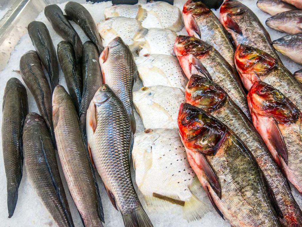 5 Ikan Paling Menyehatkan yang Cocok Untuk Diet