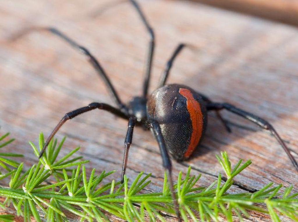 Fobia Laba-laba Picu Kerusuhan Sampai Melibatkan Polisi
