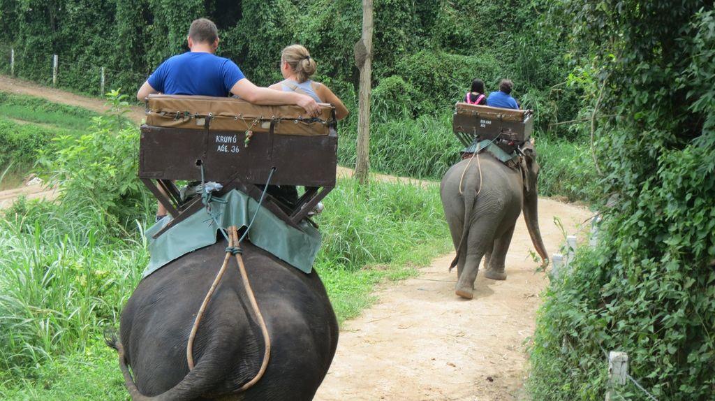 Ketika Wisata Naik Gajah & Nonton Lumba-lumba Mulai Dibatasi
