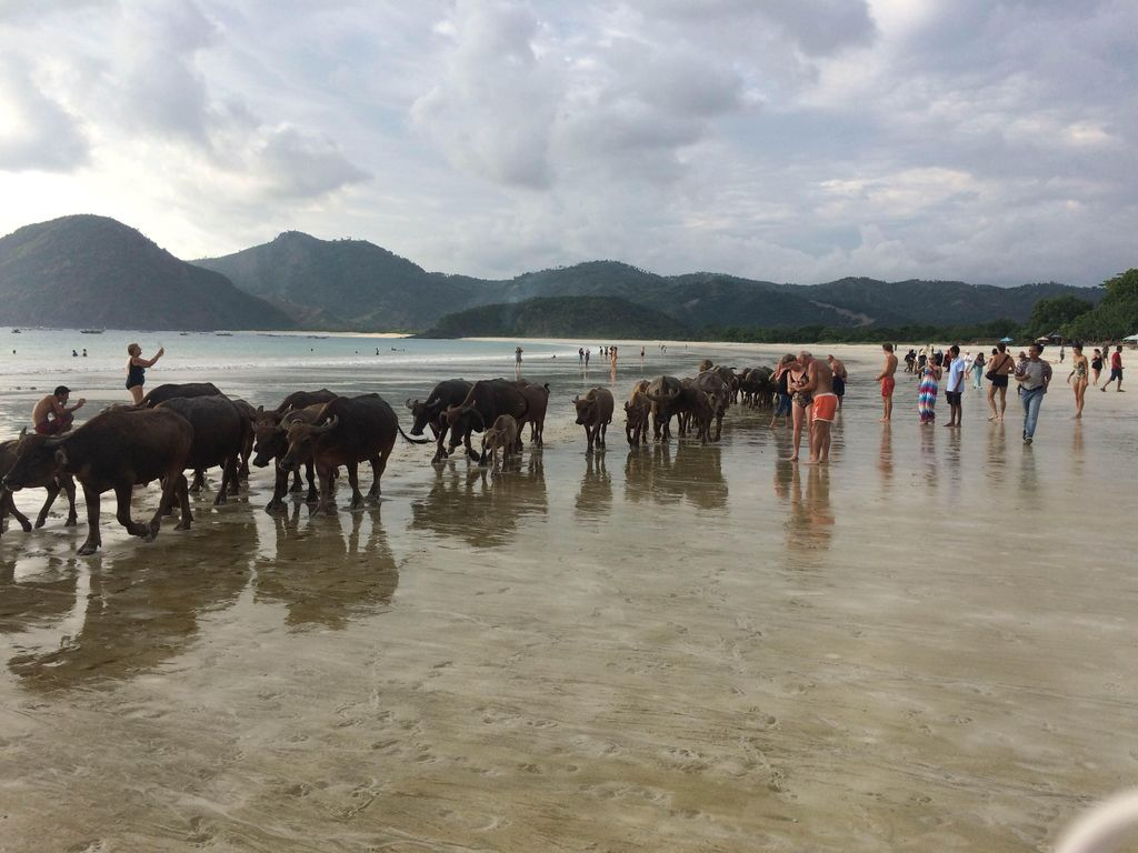 5 Ide Tempat Wisata Mudik di Lombok: Serba Pantai!
