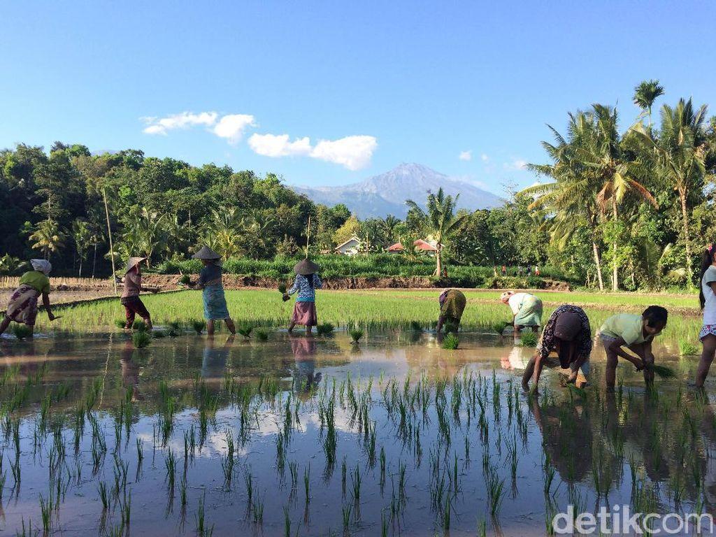 Jalur Pendakian Baru Gunung Rinjani Ada di Desa Wisata Tertua Lombok: Tete Batu