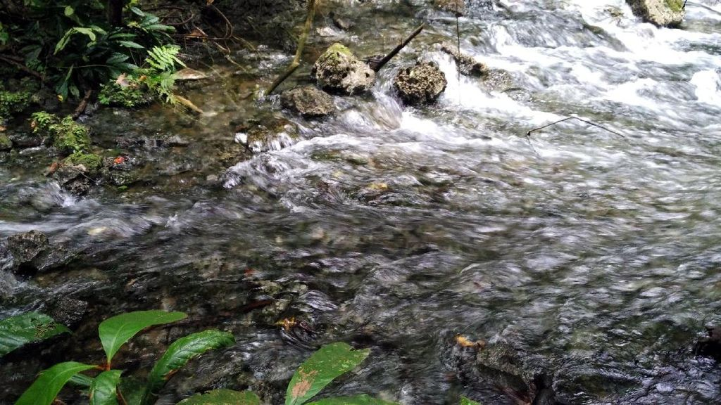 Misteri di Balik Sungai Biru di Raja Ampat