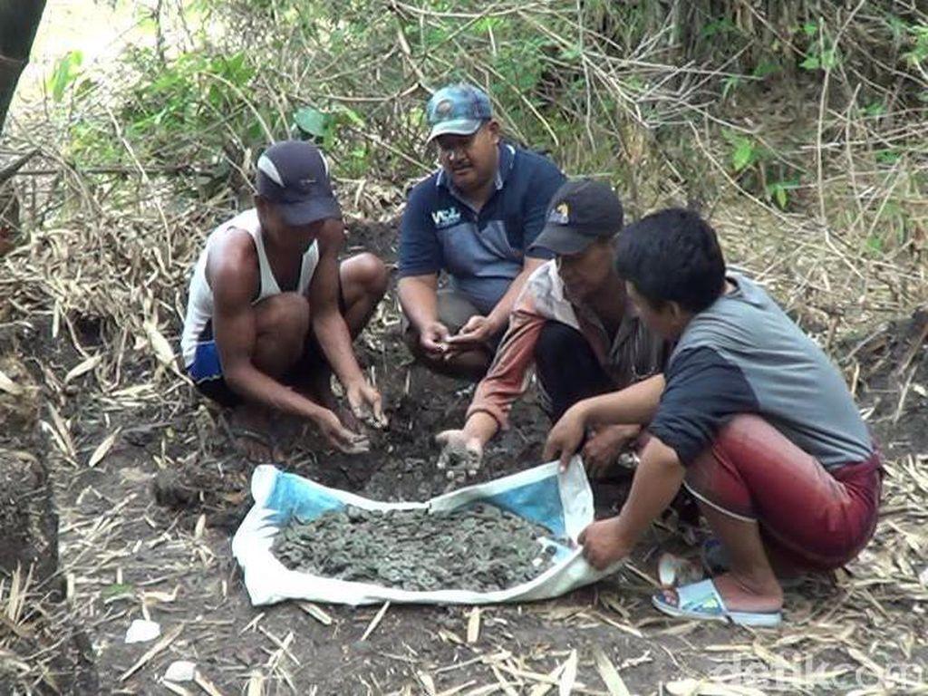 Warga Lamongan Temukan Ribuan Koin Saat Gali Tanah di Dekat Makam