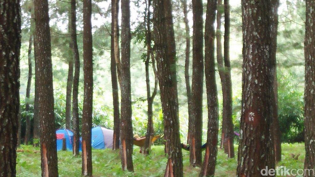 Yang Lagi Hits di Jawa Timur, Hutan Pinus Banyuwangi