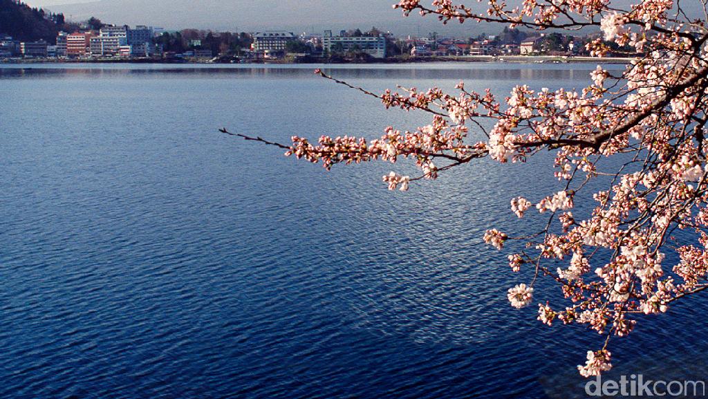Jepang, Bukan Cuma Sakura dan Fujiyama