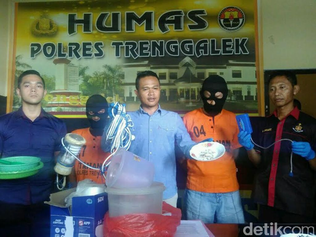 Polisi Trenggalek Tangkap Sindikat Penyelundup Benih Lobster