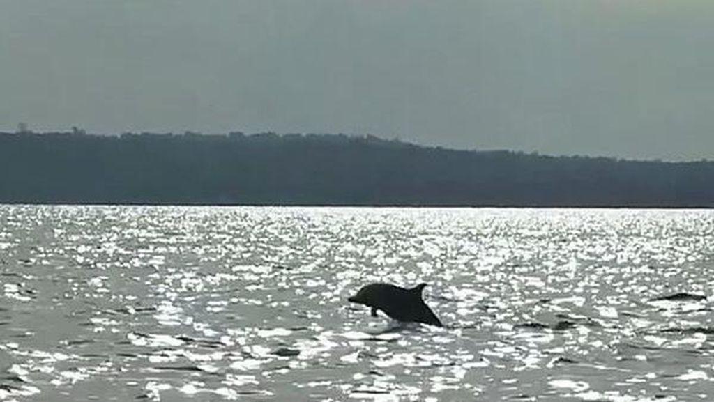 Momen Langka, Melihat Lumba-lumba Beraksi di Wakatobi