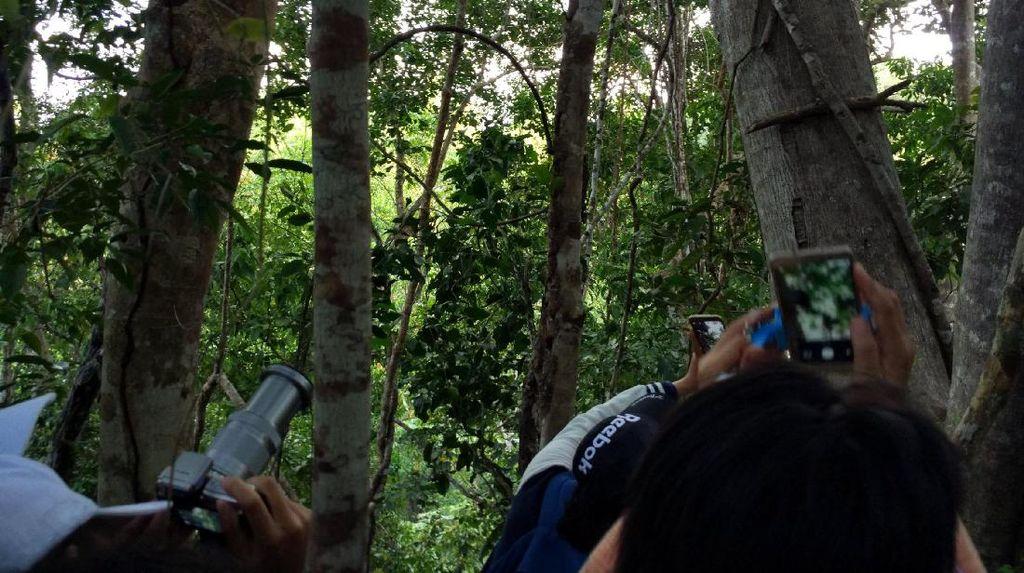 Hutan Tempat Melihat Cenderawasih di Raja Ampat