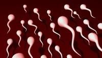 7 Makanan Penambah Sperma, Makin Tokcer dan Berlimpah