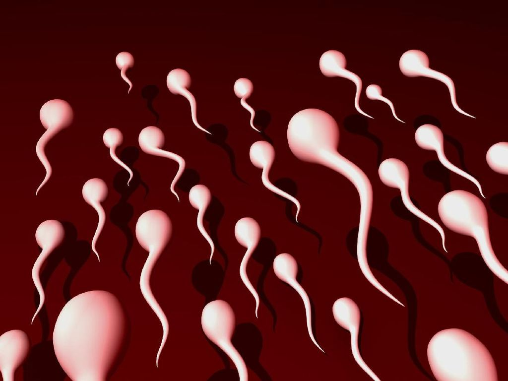 Seputar Mitos-Fakta, Benarkah Makin Tua Jumlah Sperma Menipis?