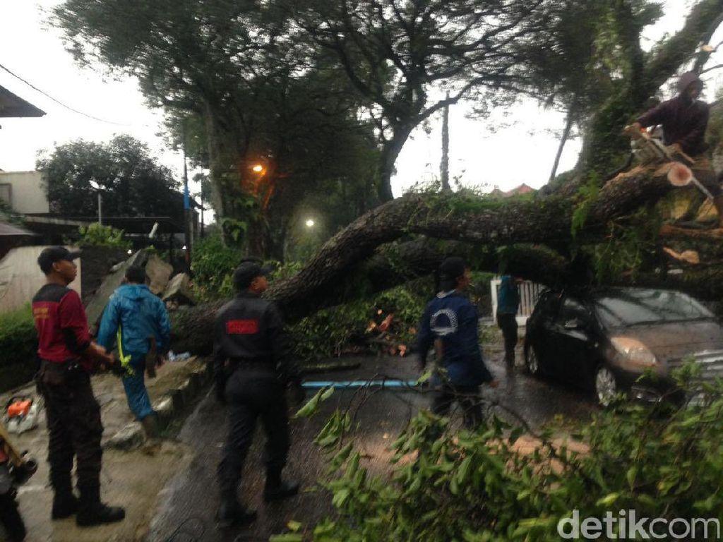 Begini Cara Pemkot Bandung Waspadai Pohon Tumbang