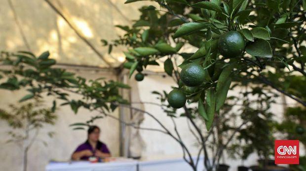 Salah satu stand yang menampilkan beragam buah jeruk pada Pameran buah bertajuk