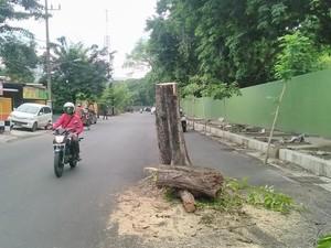 Disebut Ada 7 Kecelakaan Akibat Pohon Maut di Jl Setail, Ini Jawaban Polisi