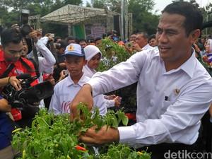 Lagi, Mentan Bagikan 500 Ribu Bibit Cabai untuk Lampung