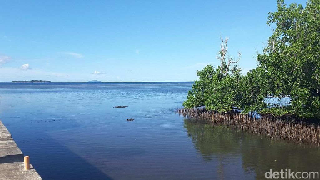 Hutan Mangrove Bahowo, Benteng Alam yang Tersisa di Manado