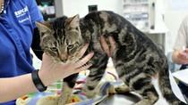 Ditinggal Tanpa Makanan, 14 Kucing di Adelaide Saling Memangsa