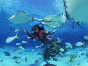 Ini Dia 7 Tips Diving di Tulamben