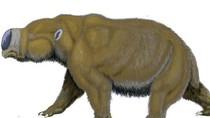 Fosil Gigi Wombat Purba Sebesar Badak Ditemukan di Melbourne